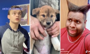 TikTok celebrities Danny Godlewski, an Australian Reptile Park dingo puppy and Ian Zaro