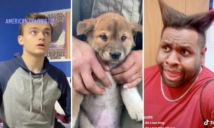 TikTok celebrities Danny Godlewski, an Australian Reptile Park dingo puppy and Ian Zaro