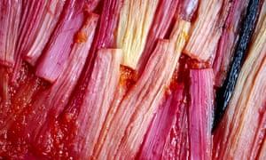 Pink forced rhubarb