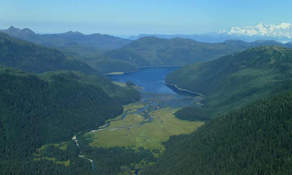 The Tongass national forest in an undated handout photo issued by Aarhus University.