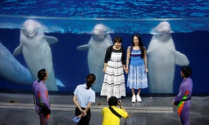 Visitors pose with belugas after a show in Chimelong Ocean Kingdom, Zhuhai, China