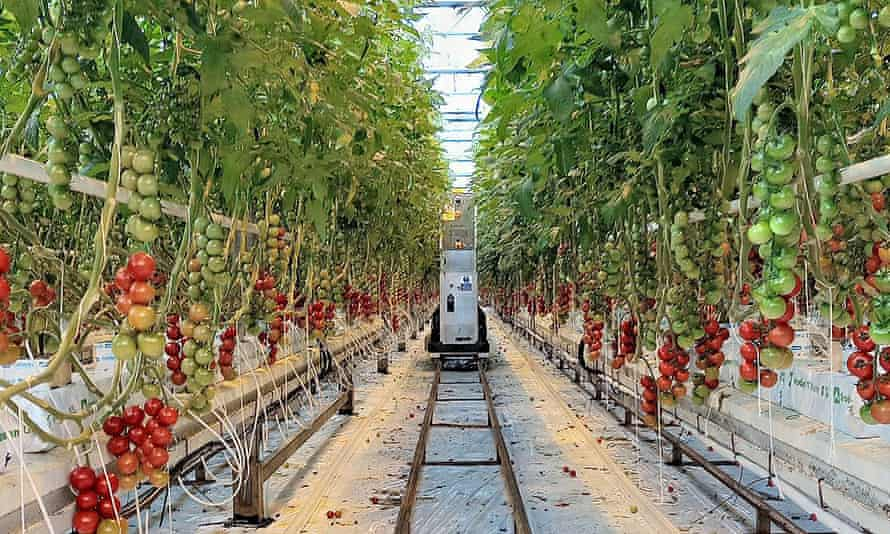 Startup company Xihelm's harvesting robot