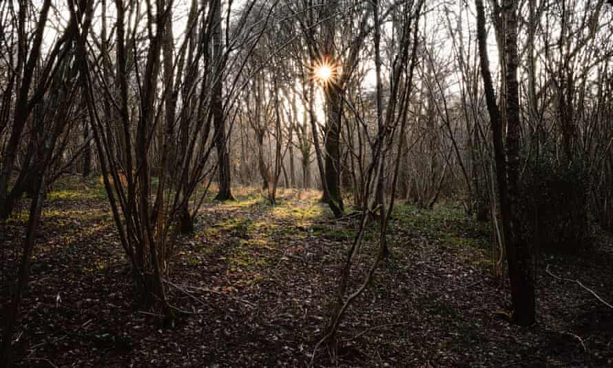 Dusk in Rosier Wood, Billingshurst, West Sussex.