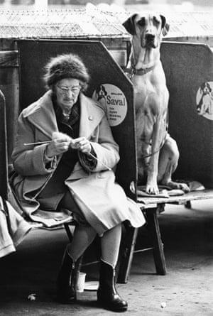 A woman knits next to a great Dane
