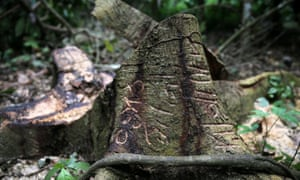 A different kind of Edgeland … a tree trunk is carved with markings in an unreserved forest in the town of Igede in Nigeria's southwest state of Ekiti.