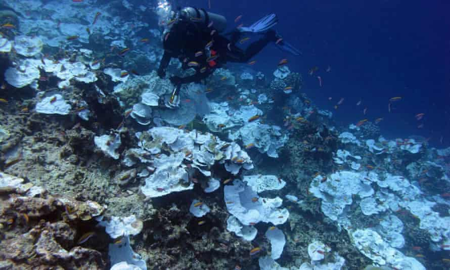 Bleaching at a coral reef in the Pacific.