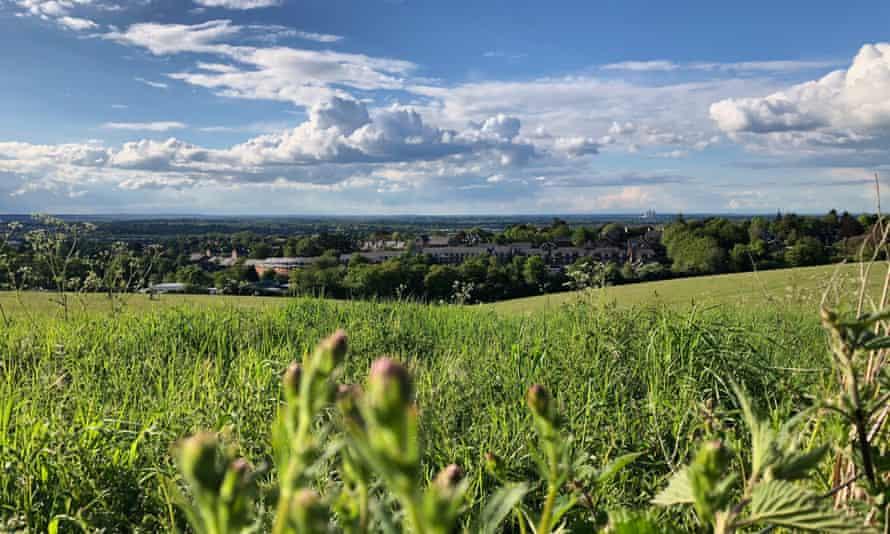 Pewley Down Fields