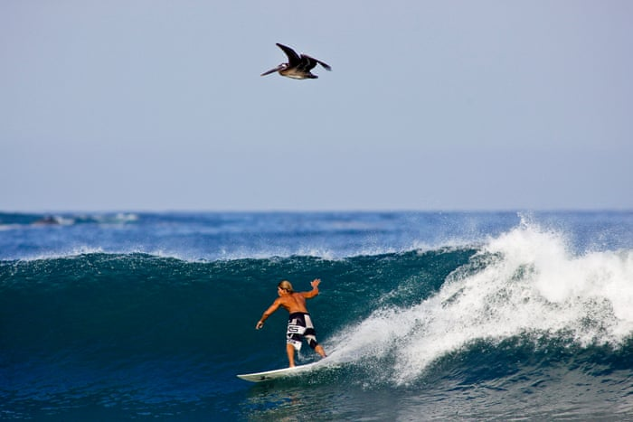 Sayulita, hippy-chic Mexico on the Pacific coast | Mexico holidays | The  Guardian