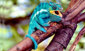 This strange blue dog perching on a branch would confuse the heck out of traditional machine learning algorithms.