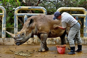 Hsinchu, Taiwan. A worker at the Leofoo village zoo cleans Emma, a five-year-old female southern white rhino, with mud before her journey to Japan's Tobu zoo for breeding