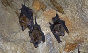 Horseshoe bats may have been the primary source of the disease.