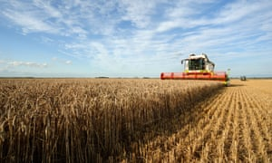 Combine harvesting wheat in the west Norfolk Fens
