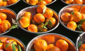 Bowls of oranges