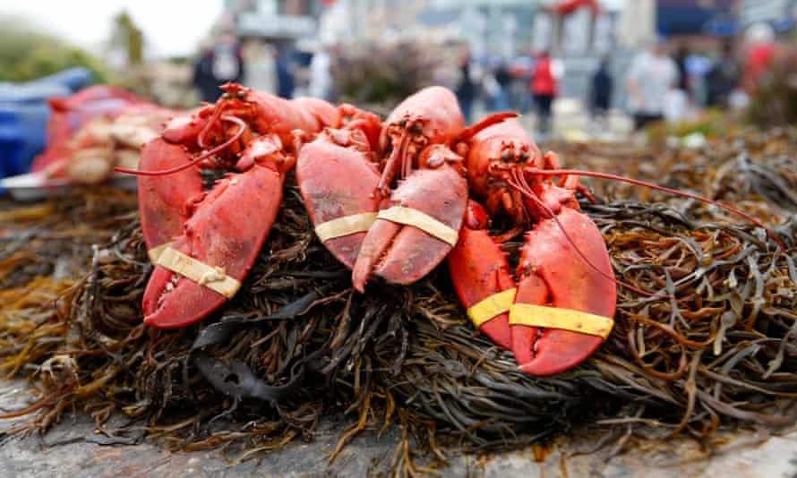 It is unknown whether pot smoke calms lobsters or has any effect on their meat.
