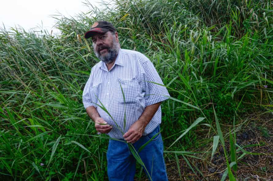 Elder Denis Rose in the Cumbungi bullrush at Tyrendarra.