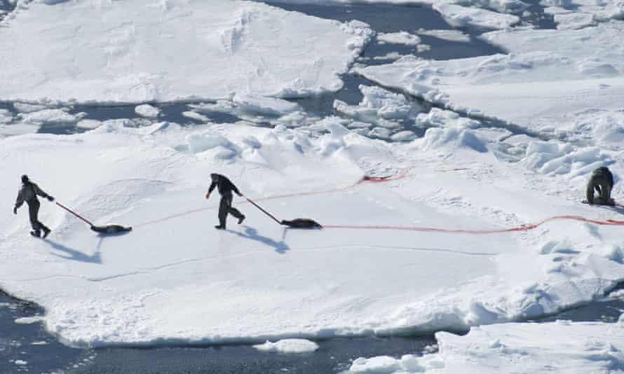 Canada's annual seal hunt.