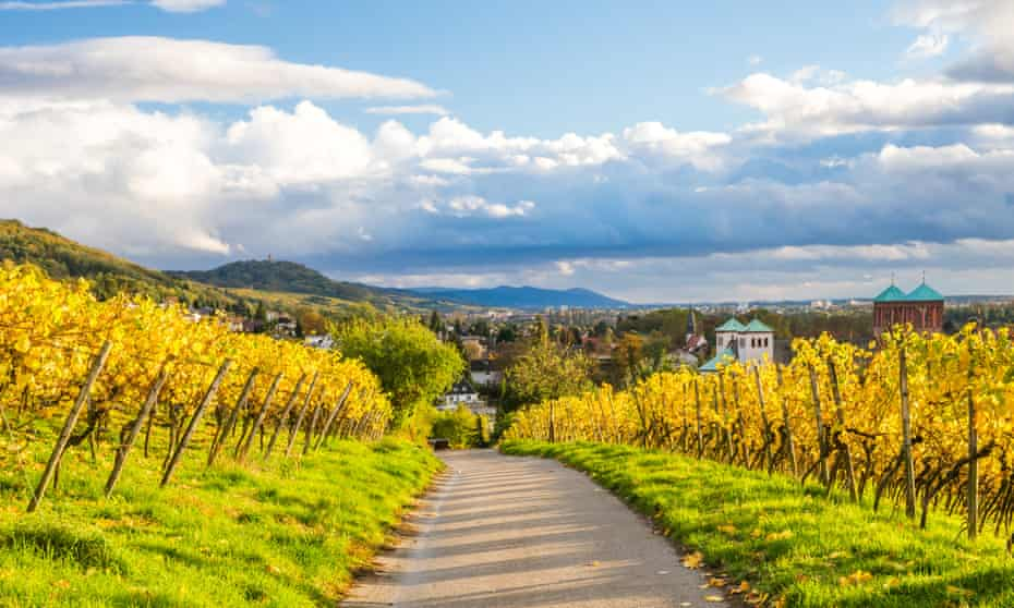 Grapevines in autumn in Hesse: bus and train travel cards for tourists now make it easier – and greener – to explore the region.