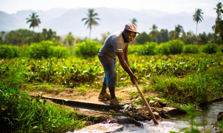 Timberland is exploring the idea of buying organic cotton from Haiti after a successful project helping local farmers plant trees.