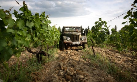 using an old truck to harvest ancient vines near Tbilisi, Georgia.