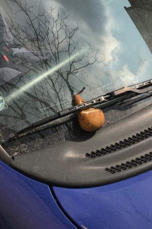 A pear under a windshield wiper on an automobile