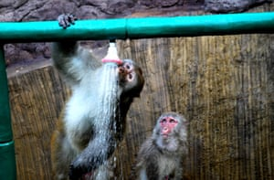 Macaques cool off in showers at the Wulongkou scenic resort in Jiyuan as a heatwave hits eastern China