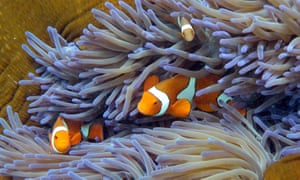 Religious leaders of many faiths want more to be done to protect Australia's Great Barrier Reef.