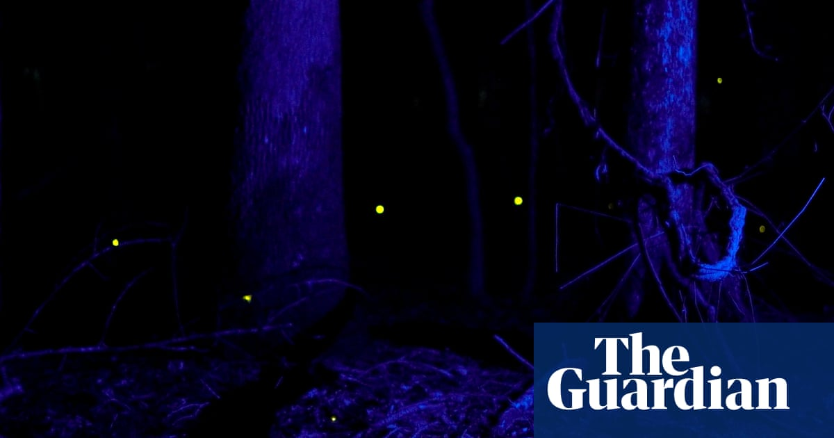 'Magical': synchronous fireflies light up US national parks