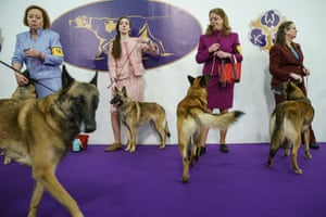 Handlers and their Belgian malinois