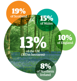 Infographic of percentages of woodland cover in UK regions