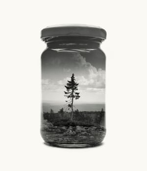 Old Tjikko from Jarred & Displaced, a series by Finnish photographer Christoffer Relander