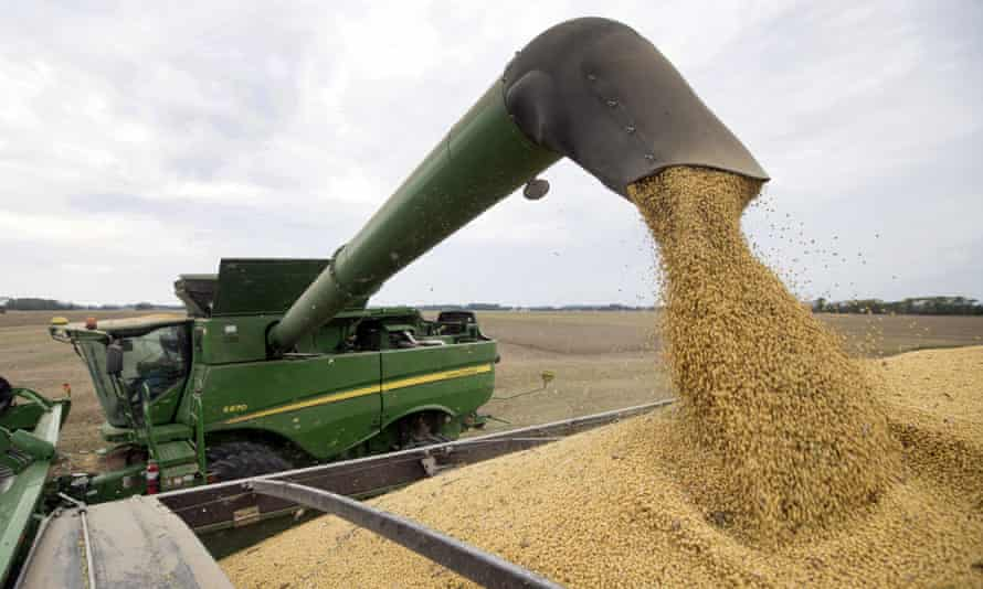 Soya beans being harvested on a US farm