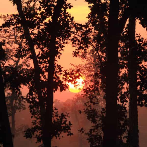 The Chhattisgarh forest