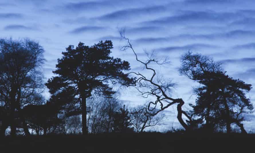 The night skyline of birch and pine trees at Lightwood from below.