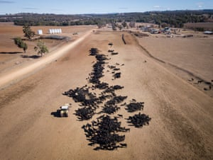 An aerial view of the cattle feeding operation on the property Toorawandi