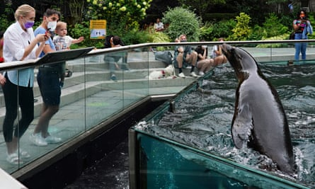 a seal in central park zoo