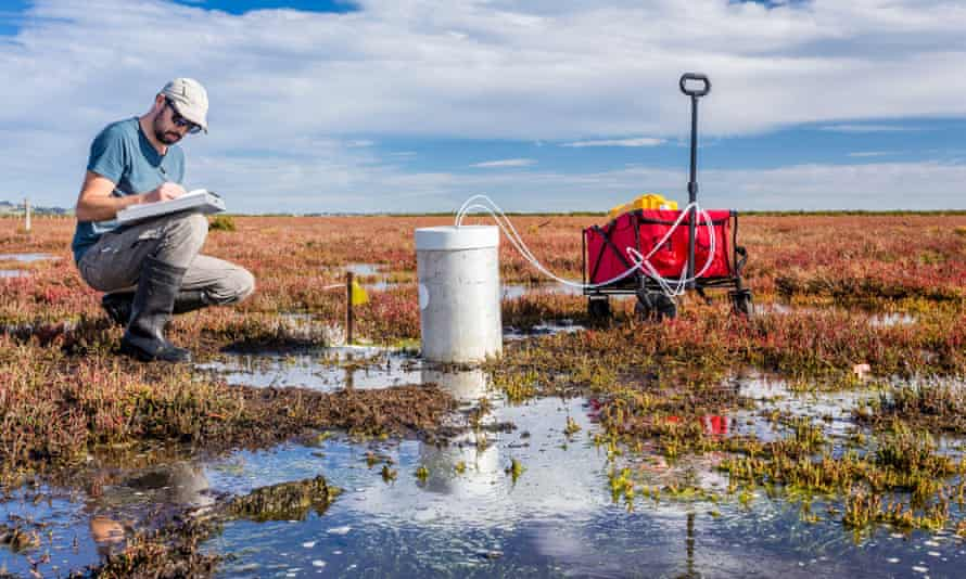 Scientist measuring greenhouse gas emissions at a wetland