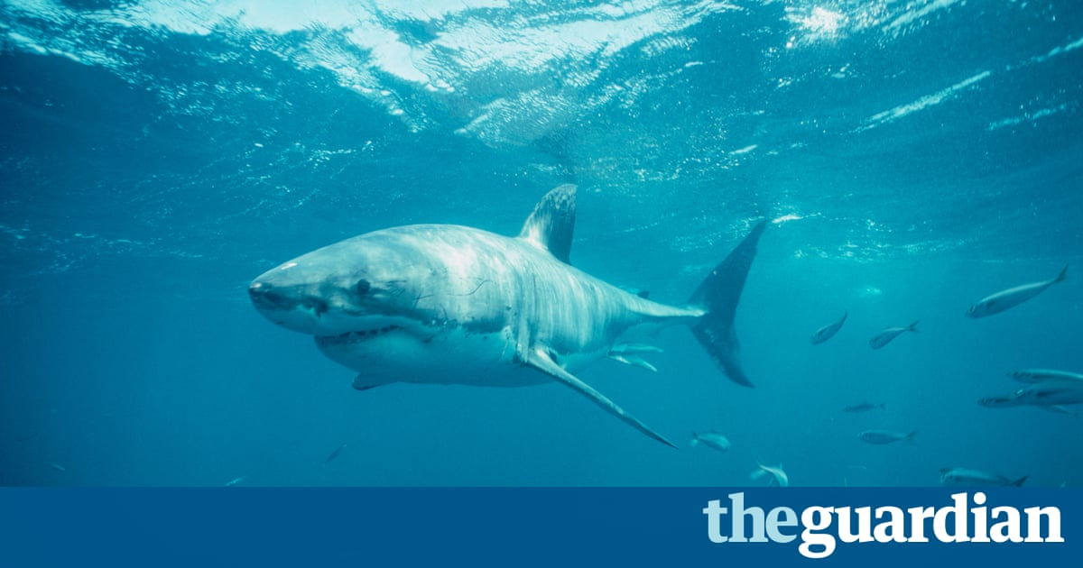 Man Killed By Shark While Diving With Daughter Off