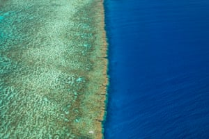 Ribbon Number 6 Reef