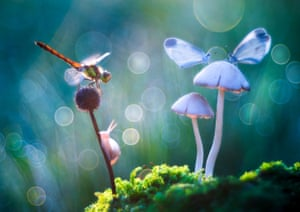 An image from Petar Sabol Sharpeye's series of insects in blue