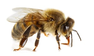 Hive of activity: bee-like robots could be sent to Mars.