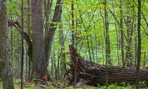 Dead wood provides habitats for birds and mammals