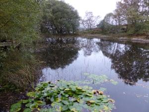 Pond at Gwaith Powdwr nature reserve at Penrhyndeudraeth.