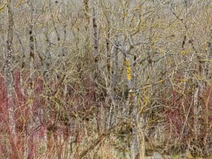 Edward Burtynsky: no#13 (1) Springer will show the last pieces of Edward Burtynsky Edward Burtynsky, Natural Order #13, 2020 Archival pigment print, 121 x 163 cm, Ed. 6
