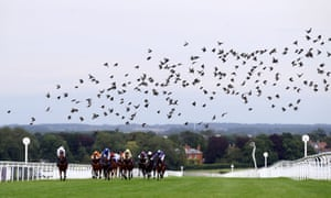 Birds flocked overhead as racing continued behind closed doors at Beverley on Tuesday.