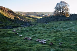 A glistening arc of mushrooms below Holwick Scars in the North Pennine Hills