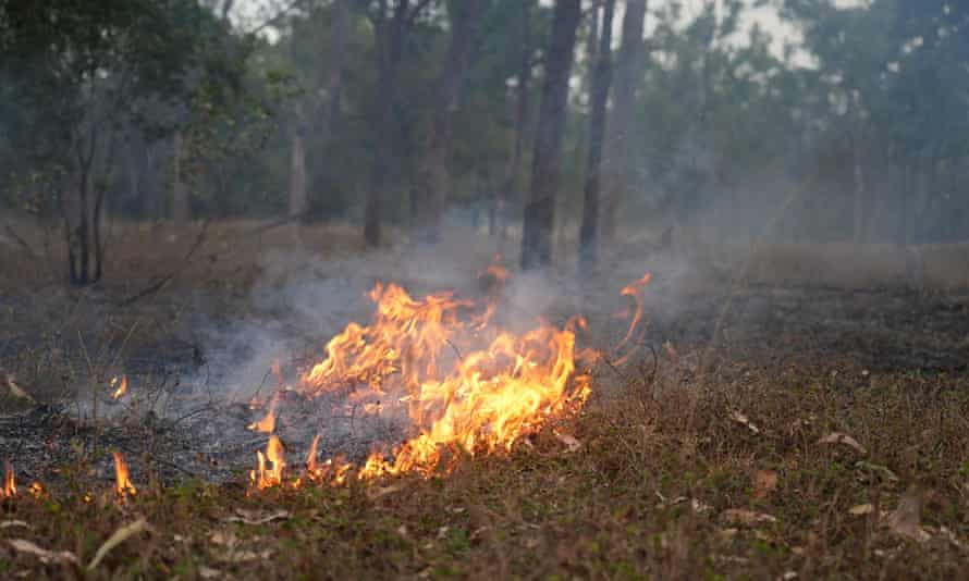 High intensity fire is critical to keeping the delicate balance of the golden shouldered parrot habitat in check.
