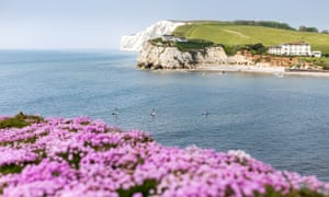Sea thrift in bloom above Freshwater Bay with Tennyson Down in the distance.