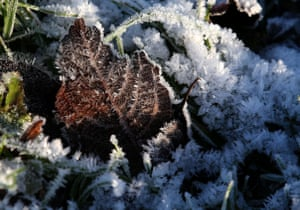 A frost-covered leaf at the Forth and Clyde canal near the Kelpies, Scotland.