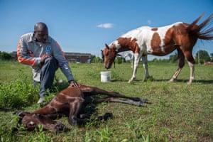 Eric Clark with newborn colt in Greenville