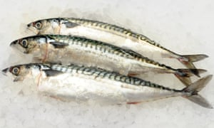 Three mackerel fish on a bed of ice.